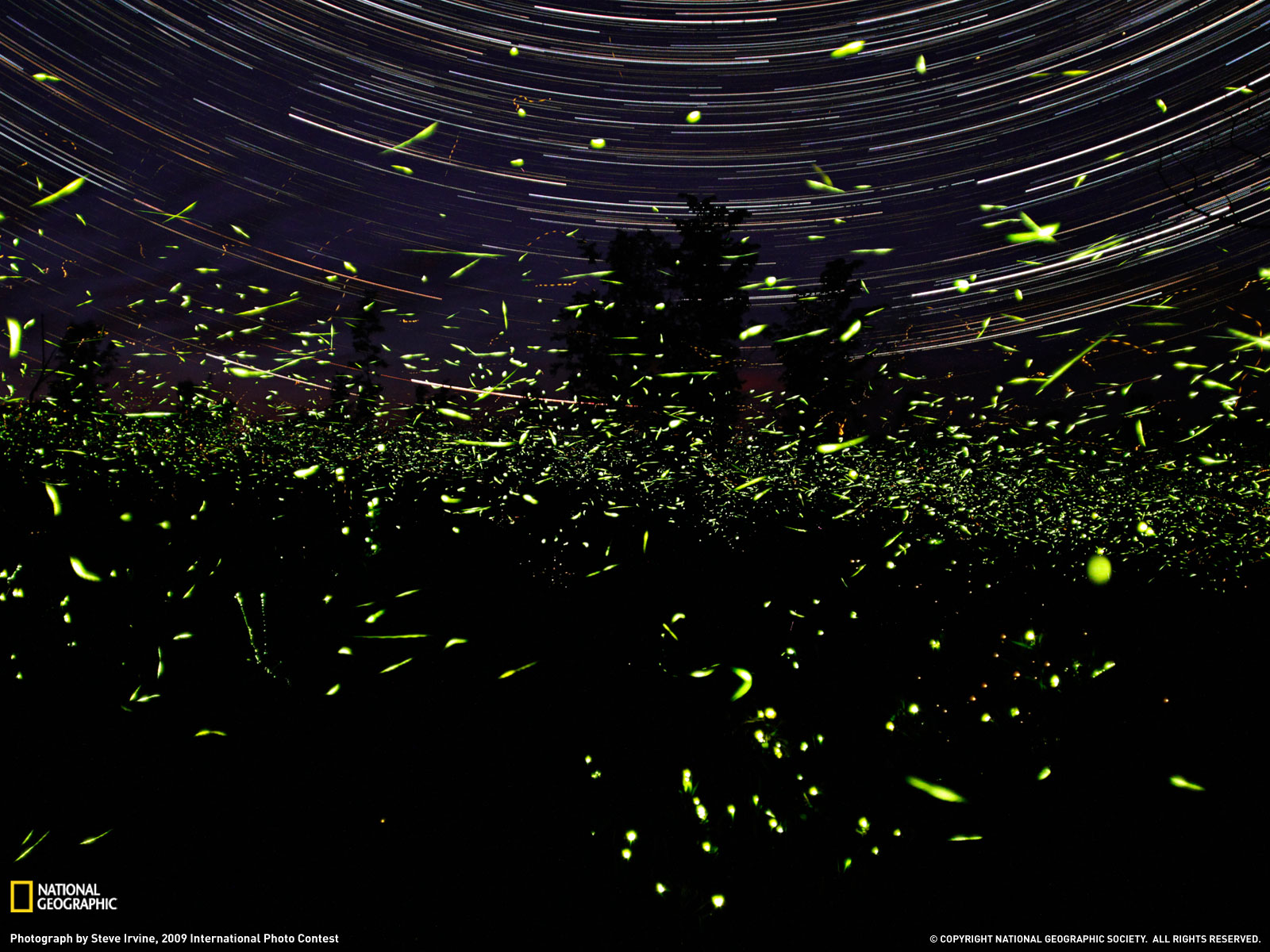 Fireflies In The Garden Midnight Wine Poetry Div
