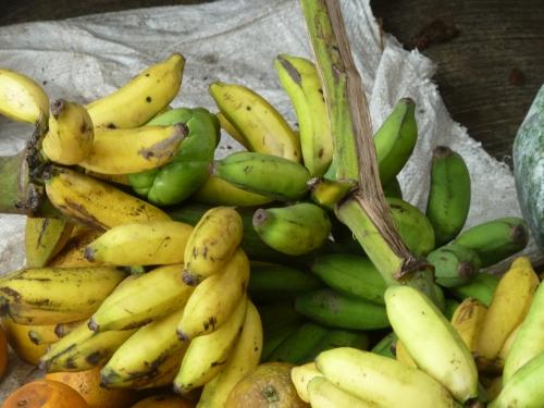 The tiny, tasty apple bananas are in season.