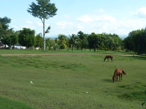 WITH ALL THE PRETTY HORSES, WITH ALL THE CATTLE AND PASTURES AND FARM FIELDS, I FEEL RIGHT AT HOME IN SPANISH LOOKOUT, BELIZE.