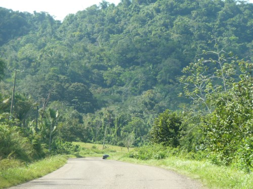 Until next time, happy trails, buckaroos. (In the photo: Hummingbird Highway between the capital city of Belmopan--the world's smallest capital city--and the Caribbean coastal area of Punta Gorda down in southern Belize. It's known as one of the world's most scenic highways.)