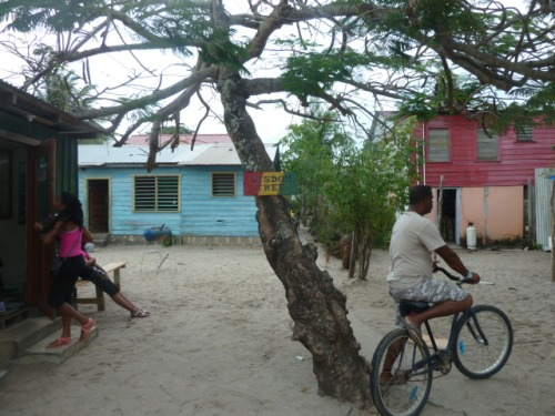 "The ""Wisdom Tree"": Placencia Beach"