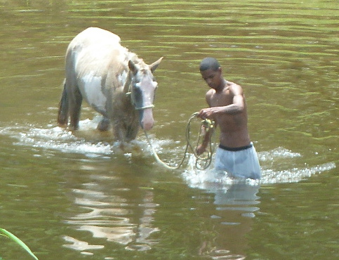 Guys from the bush wash their horses down below the San Ignacio Library where I spend a lot of time reading, writing and looking out the window at people washing their horses and doing whatever else they do down there in that shallow water.