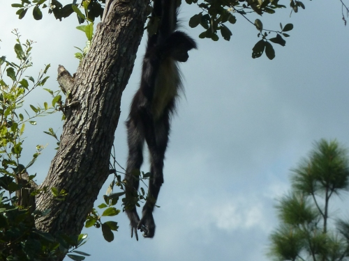 Until next time, be like the Belizean spider monkey and just hang in there