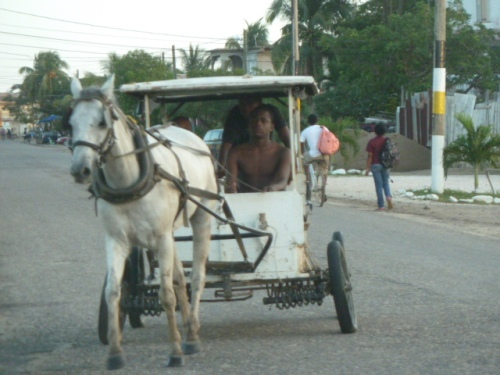 When in Dangriga call a horse cab