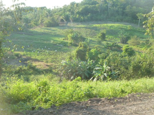 A view of my the family's beautiful, lush farm.