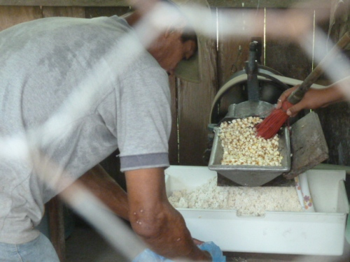 Grinding corn for the tortillas.