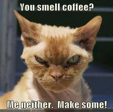 Is there a more stimulating and addictive drug than caffeine? It makes even a pooty tat cranky.