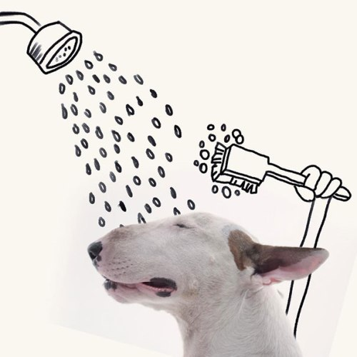 Nothing like a refreshing shower. (Drawings and photos by Rafael Mantesso.)
