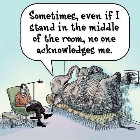 Pity the elephant, so large and yet so ignored..