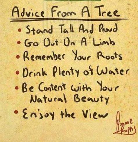 Self-help advice from a tree.